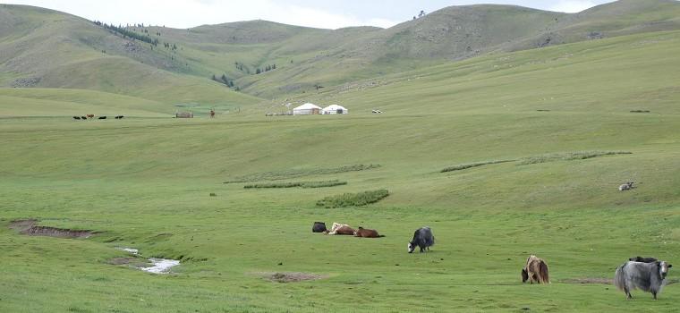 Mon voyage en Mongolie