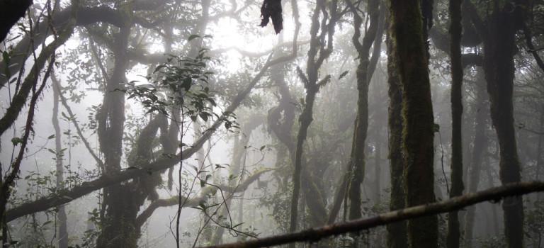 Cameron Highlands: une forêt, du thé et des papillons…