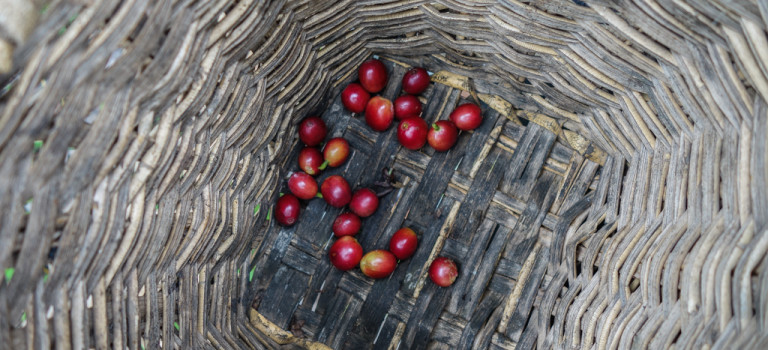 Du café et des palmiers!
